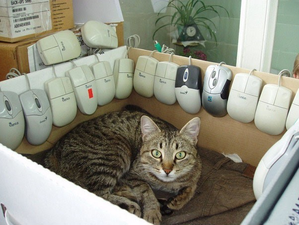 Фото прикол  про котів та комп'ютерну мишу