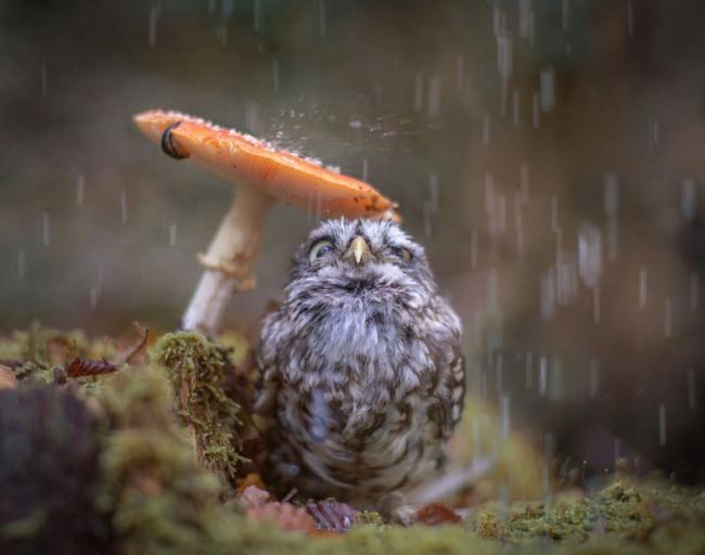 Фото прикол  про птахів, гриби та дощ