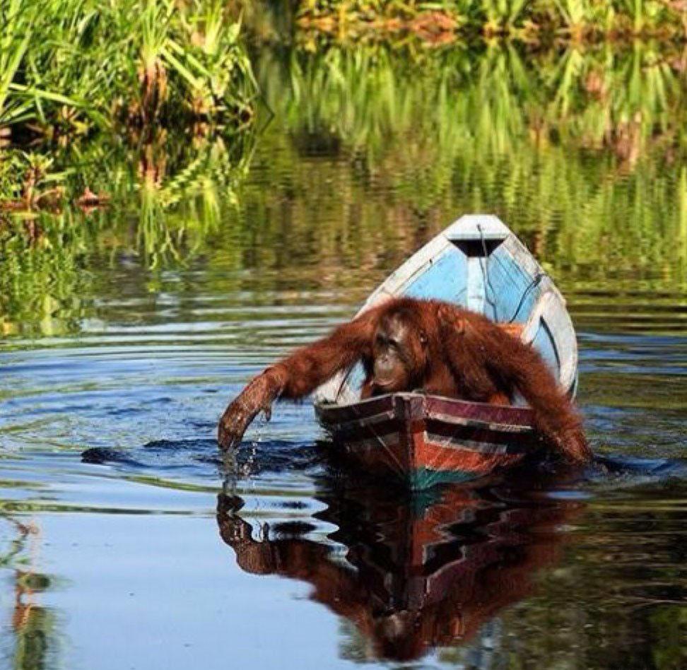 Улечу далеким, прикольные картинки на лодке