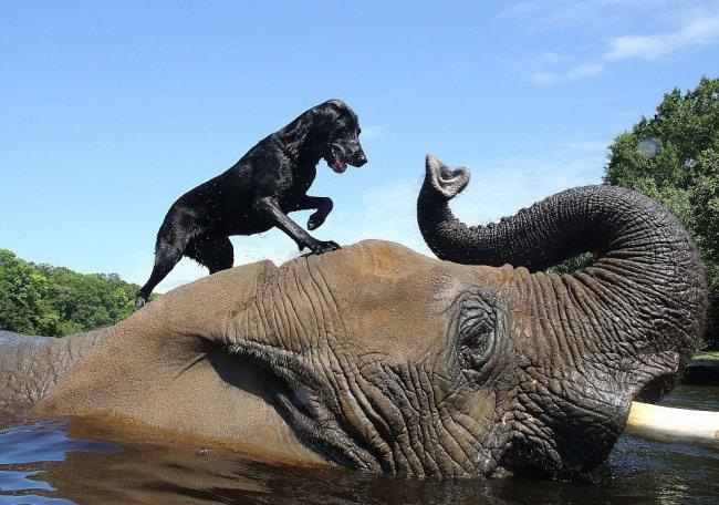 Фото прикол  про слонів та собак