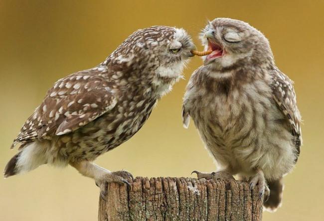 Фото прикол  про сову