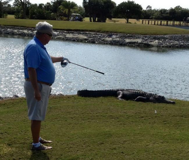Фото прикол  про гольф та крокодилів