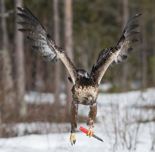 Фото прикол  про птахів та ніж