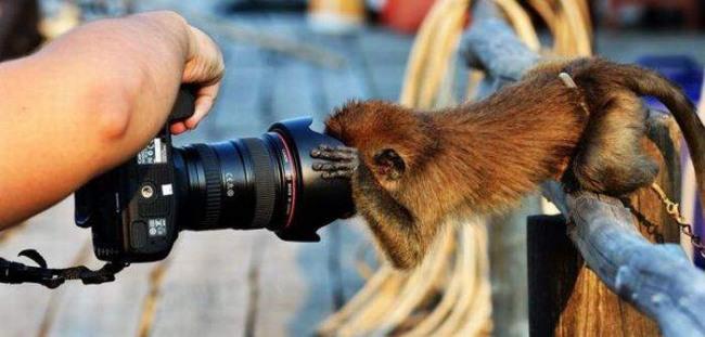 Фото прикол  про мавп та фотоапарати