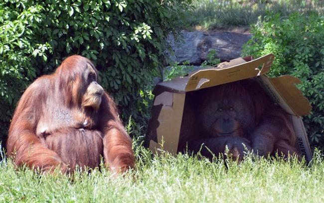 Фото прикол  про мавп