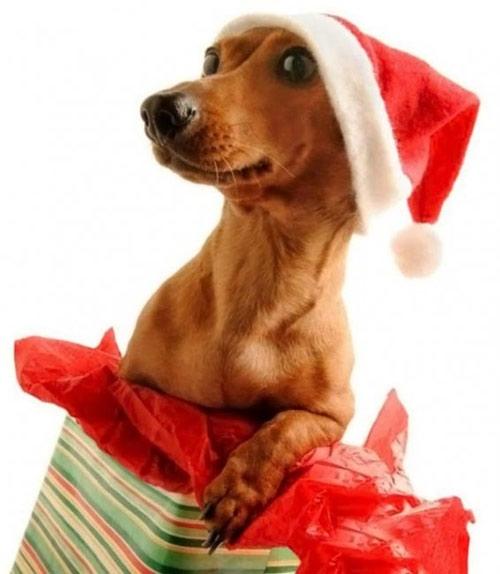 Фото прикол  про собак та подарунки